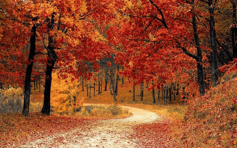 秋の男性用アウター