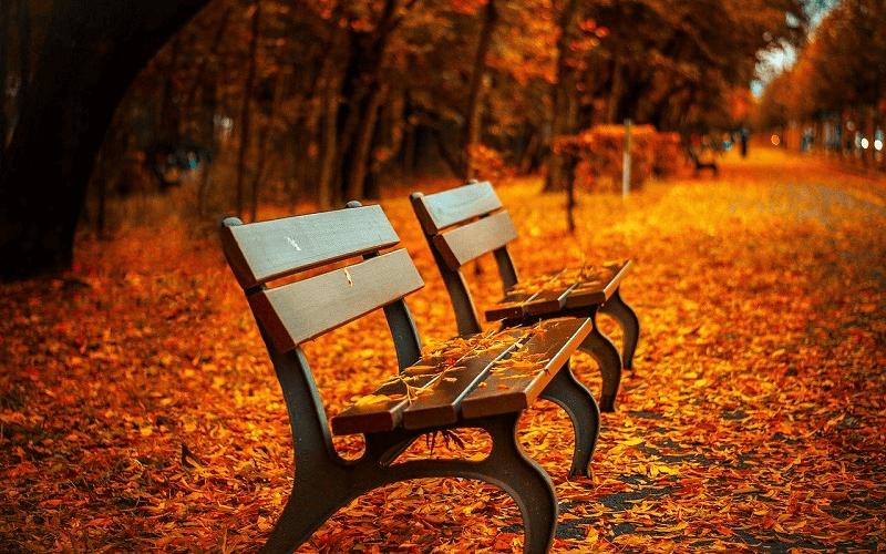 秋の女性用アウター
